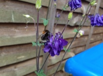 Beautiful bubble bee